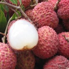 特产新鲜荔枝水果之王 农家特产清甜多汁5斤顺丰包邮